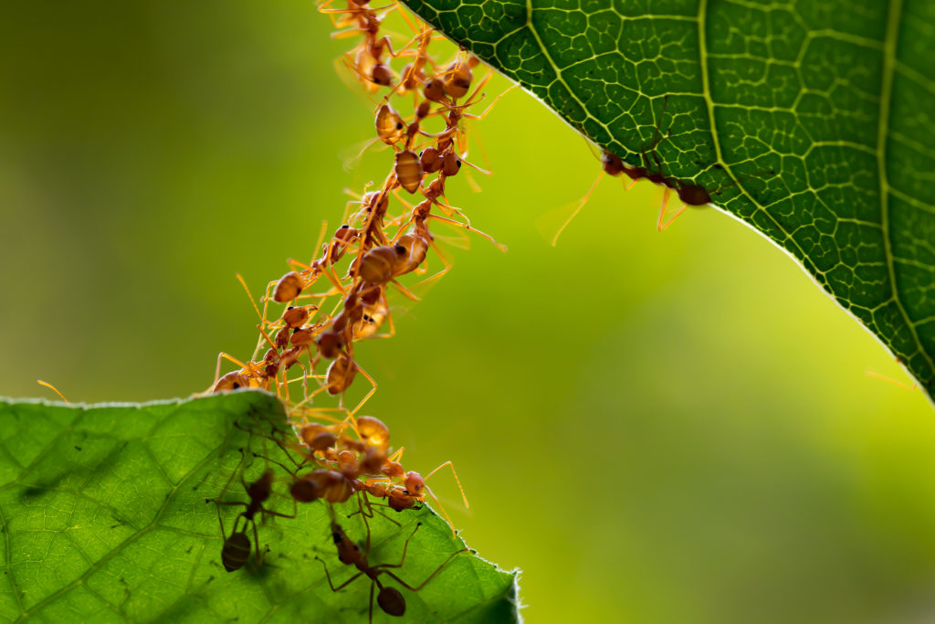 Ants working together to achieve a goal